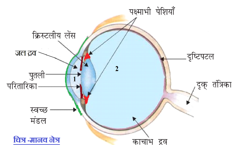 मानव नेत्र की संरचना , structure of human eye in ...